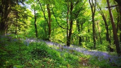 Ballyannan Wood